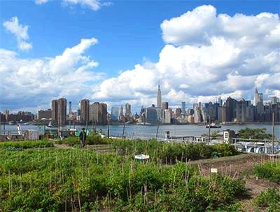 20 Free Kids Activities to do in Brooklyn - Eagle Street Rooftop Farm