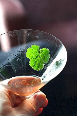 cilantro cocktail